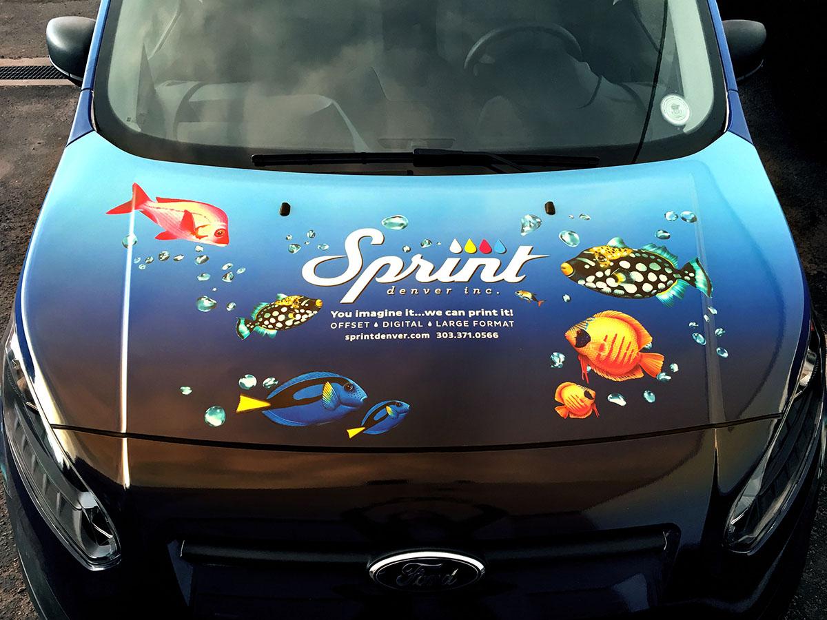 Sprint_Octopus_02_Hood_0605